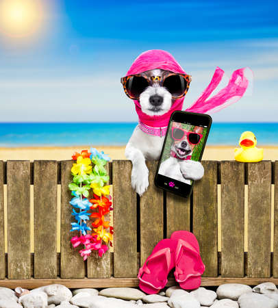 terrier dog resting and relaxing on a wall or fence at the  beach  ocean shore, on summer vacation holidays, wearing sunglasses, taking  a selfie with smartphone or mobile phone Stock Photo