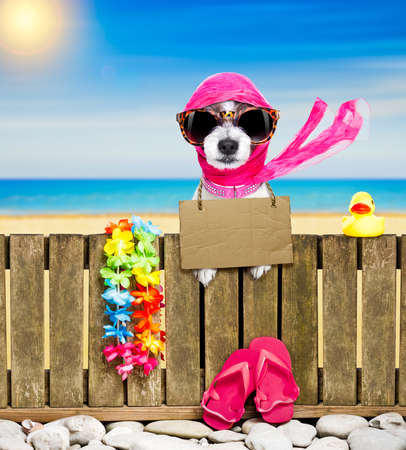 terrier dog resting and relaxing on a wall or fence at the  beach  ocean shore, on summer vacation holidays, wearing sunglasses, with  cardboard, with  cardboard Standard-Bild