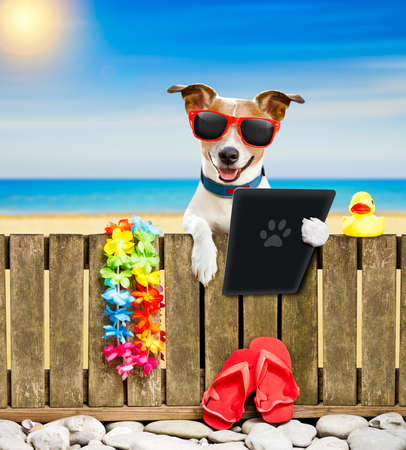 sunbath: jack russel dog resting and relaxing on a wall or fence at the  beach  ocean shore, on summer vacation holidays, reading a tablet ebook  digital screen