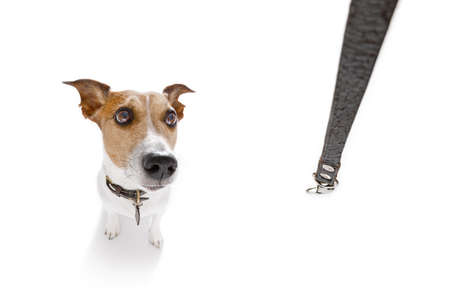 개 소유자와 재생 하 고 가죽 끈, 광각 fisheye보기와 함께 산책을 기다리고 개