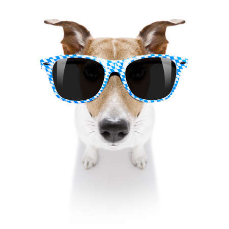 funny jack russell wearing bavarian sunglasses sitting on the ground , isolated on white background