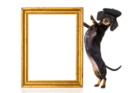 dachshund sausage dog with beret hat, isolated on white background, behind frame banner  or placard