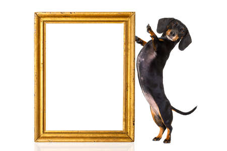 board: dachshund sausage dog holding a golden retro wood frame, empty with copy space Stock Photo