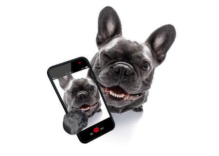 Cane curioso del bulldog francese che osserva in su al proprietario che prende un selfie o un'istantanea con il telefono cellulare o lo smartphone Archivio Fotografico - 85850488