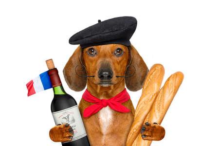 Chien de saucisse de teckel avec chapeau de béret, isolé sur fond blanc, avec du vin rouge et baguette et chapeau et drapeau français