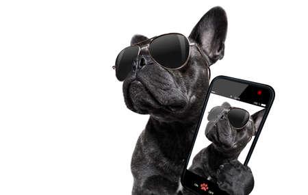 cool de moda posando bulldog francés con gafas de sol mirando hacia arriba como un modelo, tomando un selfie, aislado en fondo blanco
