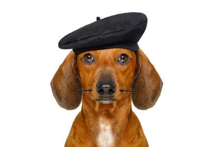 french dachshund sausage dog with beret hat, isolated on white background, behind frame banner  or placard