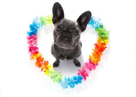 Perro de bulldog francés en el amor para el día de San Valentín feliz con la cadena de flores de arco iris en forma de corazón, mirando hacia arriba en gran angular Foto de archivo - 85777528