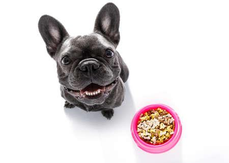 hungriger Hund der französischen Bulldogge hinter voller Schüssel mit den Leckereien oder Plätzchen, lokalisiert auf dem Weiß, das oben zum Inhaber schaut Standard-Bild