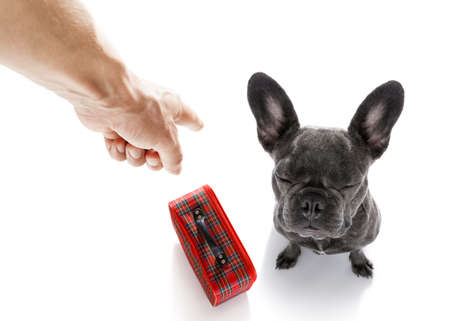 french bulldog dog  being punished by owner for very bad behavior  to leave the house, with finger pointing at dog