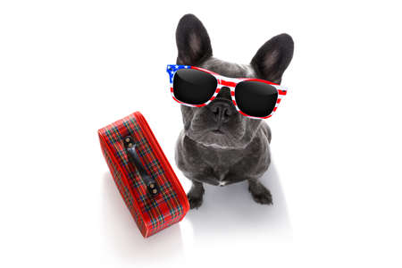 french bulldog dog looking up to owner waiting or sitting patient to go for vacation holidays with bag or luggage and usa sunglasses