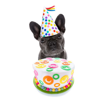 french bulldog dog  hungry for a happy birthday cake ,wearing party hat  , isolated on white background
