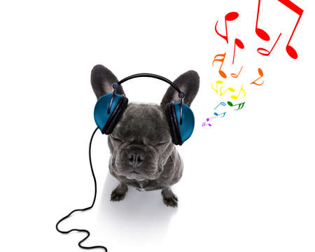 cool dj french bulldog dog listening or singing to music  with headphones and mp3 player, notes all around, isolated on white background, and closed eyes Stock Photo