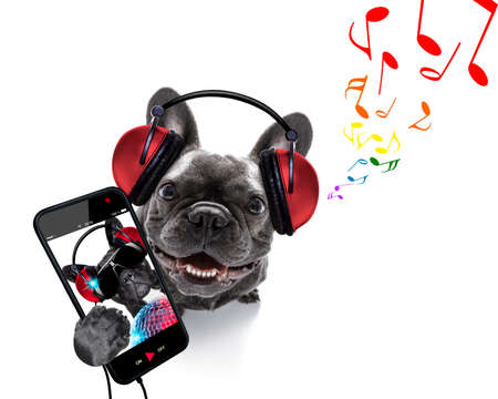 cool dj french bulldog dog listening or singing to music  with headphones and mp3 player, notes all around, isolated on white background
