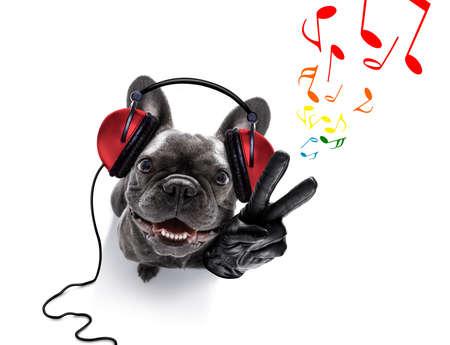 cool dj french bulldog dog listening or singing to music  with headphones and mp3 player, with peace or victory fingers,  isolated on white background Stock Photo