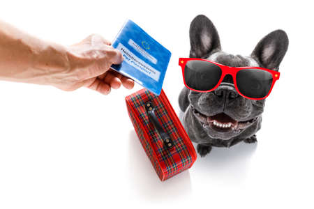 holiday vacation french bulldog  dog waiting in airport terminal ready to board the airplane or plane at the gate wearing sunglasses,  luggage or bag to the side, pet passport with owner