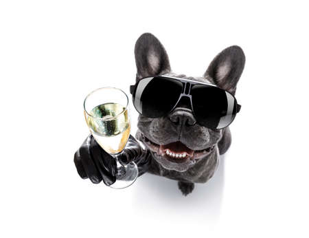 cool drunk french bulldog  dog cheering a toast with cocktail drink , looking up to owner ,   isolated on white background Foto de archivo