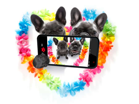 couple of french bulldog dogs in love for happy valentines day with rainbow  flower chain in heart shape  ,taking a selfie with smartphone or cell phone Stock Photo