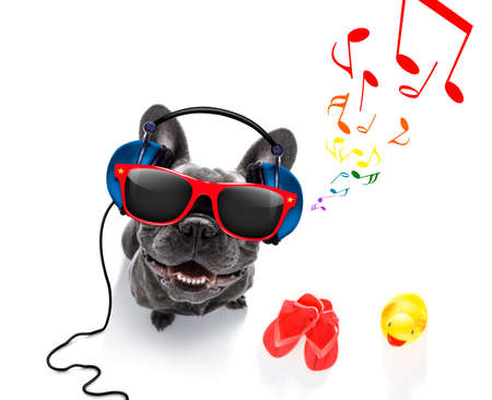 cool dj french bulldog dog listening or singing to music  with headphones and mp3 player, notes all around, isolated on white background and ready for summer vacation Reklamní fotografie - 87070174