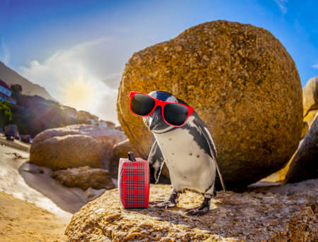 curious african penguin with funny sunglasses and bag or hand luggage at boulders beach in south africa standing on a rock Stock Photo