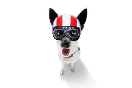escuchar: curioso perro caniche mirando al propietario para un convite de galleta, esperando o sentado paciente para jugar o salir a caminar usando un casco de moto, aislado en fondo blanco