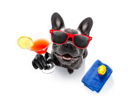 cool drunk french bulldog  dog cheering a toast with cocktail drink , looking up to owner ,ready to go on summer vacation holidays