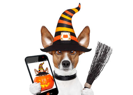 halloween devil jack russell dog  scared and frightened, isolated on white background, wearing a witch hat taking a selfie with smartphone