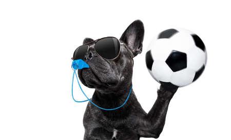 Árbitro árbitro árbitro bulldog francés perro soplando el silbato azul en la boca, atrapando un balón de fútbol, aislado sobre fondo blanco.