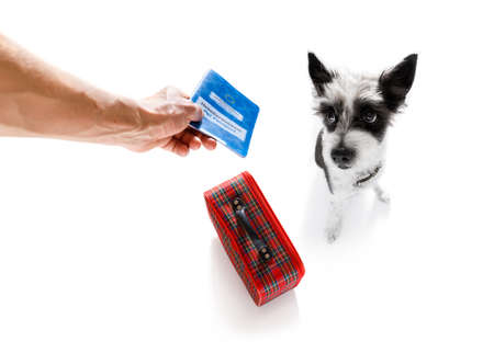 feriado de férias caniche cachorro esperando no terminal do aeroporto pronto para embarcar no avião ou avião no portão, bagagem ou saco para o lado, passaporte para animal de estimação com o proprietário