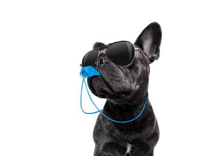 Árbitro árbitro Árbitro Perro bulldog francés soplando el silbato azul en la boca, aislado sobre fondo blanco Foto de archivo