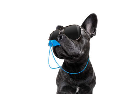 referee arbitrator umpire french bulldog dog blowing blue whistle in mouth , isolated on white background