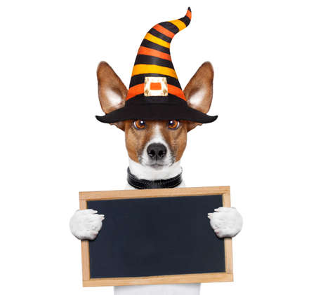 halloween devil jack russell dog  scared and frightened, holding a blank empty blackboard , isolated on white background, wearing a witch hat