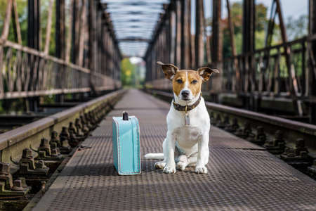 wait: lost  and homeless  jack russell dog abandoned at rail train track on a bridge,  waiting to be adopted Stock Photo