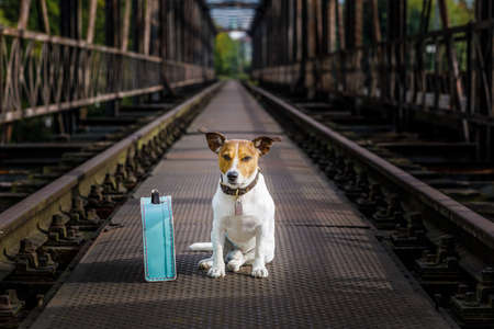 lost  and homeless  jack russell dog abandoned at rail train track on a bridge,  waiting to be adopted Stock Photo