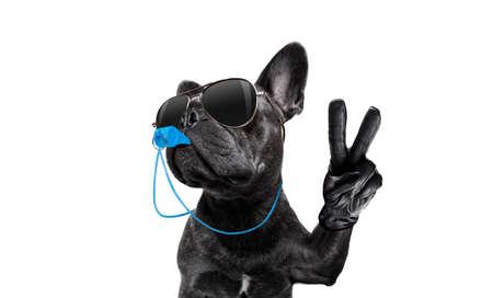 Arbitre Arbitre Arbitre Français Bulldog chien soufflant sifflet bleu dans la bouche Pentecôte paix ou doigts de victoire, isolé sur fond blanc