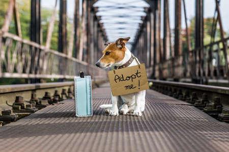 Jack Russell perdu et sans-abri chien abandonné à la voie ferrée sur un pont, avec un carton suspendu, en attente d'être adopté Banque d'images