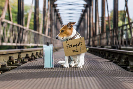 lost  and homeless  jack russell dog abandoned at rail train track on a bridge, with cardboard hanging , waiting to be adopted