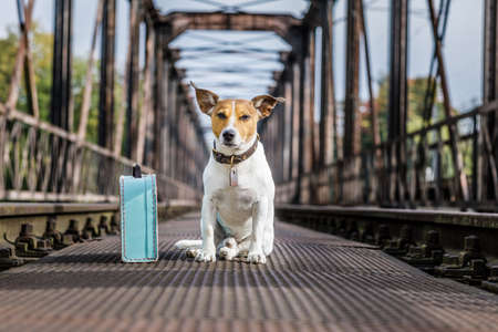road of love: lost  and homeless  jack russell dog abandoned at rail train track on a bridge,  waiting to be adopted Stock Photo