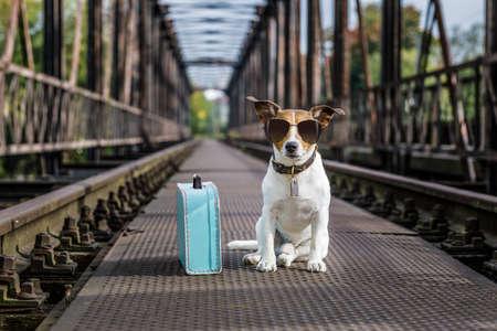 시원한 잭 러셀 개가 레일에 버려진 선로를 쓰고 기다리는 다리에서 기차 트랙
