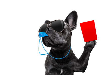 referee arbitrator umpire french bulldog dog blowing blue whistle in mouth ,showing red card,  isolated on white background Stock Photo - 87591836