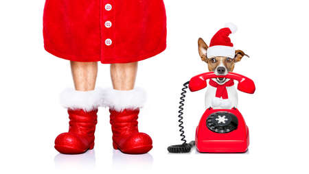 telephone interview: funny christmas  santa claus telephone call or operator   dog isolated on white background with  red  boots for the holidays