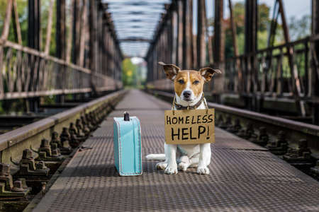 road of love: lost  and homeless  jack russell dog abandoned at rail train track on a bridge, with cardboard hanging , waiting to be adopted