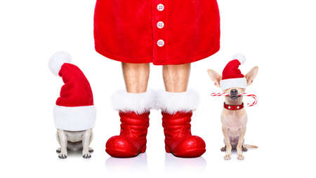 christmas santa claus couple of dogs isolated on white background with red boots and hat for the holidays waiting and sitting
