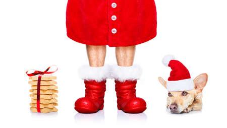 クリスマス チワワ犬との休日の赤い帽子とブーツと白い背景に分離されたサンタ クロースを扱うとクッキー