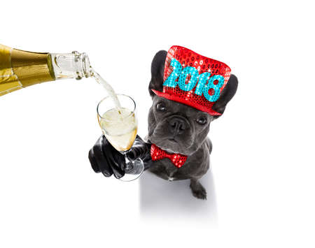 pet services: french bulldog dog celebrating  2018 new years eve with owner and champagne  glass isolated on white background , wide angle view