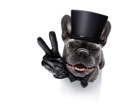 french bulldog dog celebrating new years eve with owner using victory or peace finger gesture, isolated on white background , wide angle view