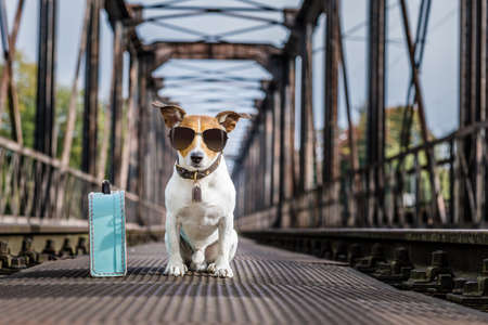 abandon: cool  jack russell dog abandoned at rail train track on a bridge,  waiting to be adopted, wearing sunglasses