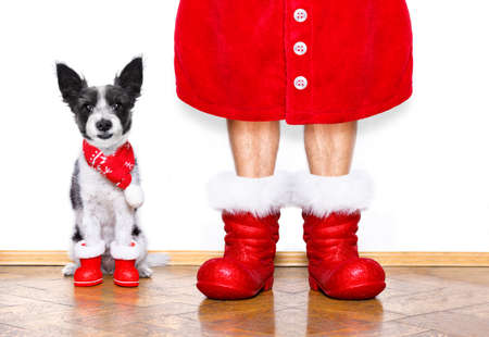 funny christmas  santa claus poodle   dog isolated on white background with  red  boots for the holidays waiting and sitting to go for a walk Stock Photo