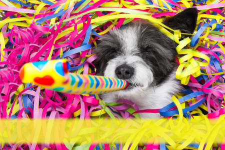 happy poodle dog having a party with serpentine streamers, for  birthday or happy new year , blowing a whistle horn with empty banner