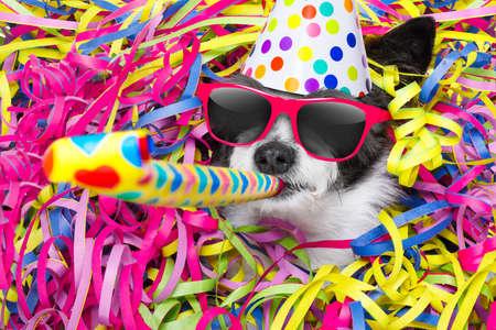 poedel hond met een feestje met serpentine slingers, voor verjaardag of oud en nieuw en blaas een fluithoorn met zonnebril en een hoed op